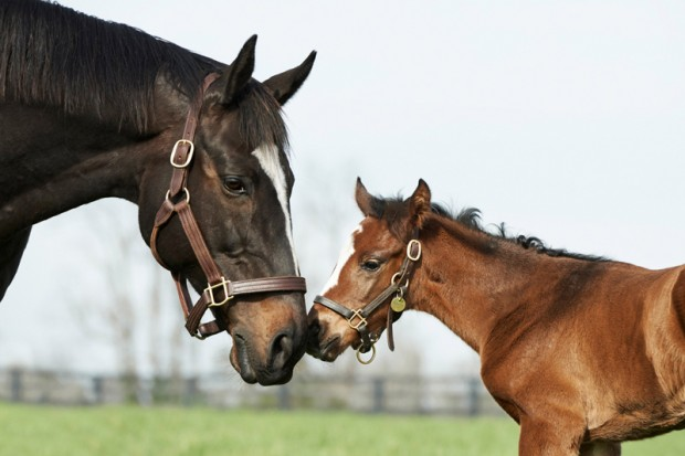 The first print released of Zenyatta and her filly. Photo by Kyle Acebo
