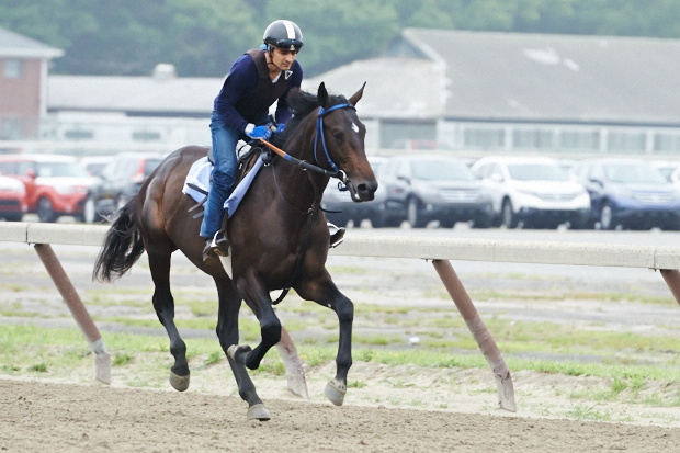 Cozmic One on the training track at Belmont. Photo by Kyle Acebo.