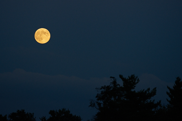 A full moon over Lane's End