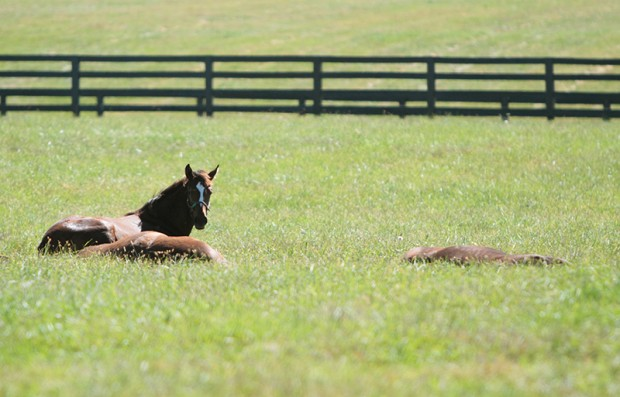 Z Princess and paddock mates lounge in the sun together. Photo by Alys Emson.