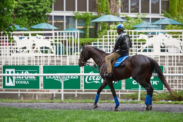 Comic One is entered tomorrow at Belmont. Photo by Kyle Acebo