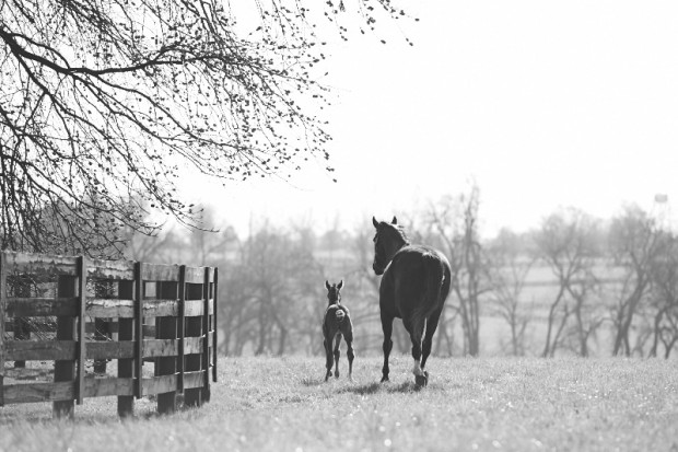 Zenyatta and Z Princess, April 2014. Photo by Kyle Acebo.
