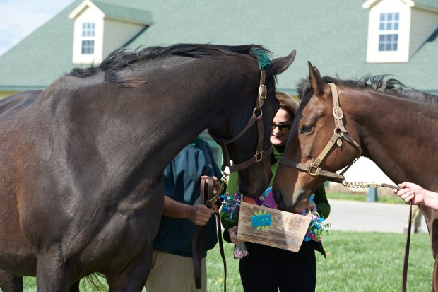Zenyatta shares carrots with her paddock mate. Photo by Kyle Acebo.